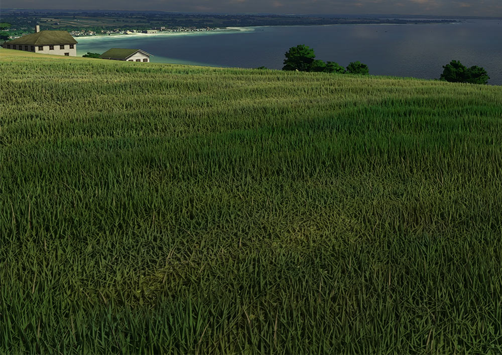 flightsim-grass.jpg